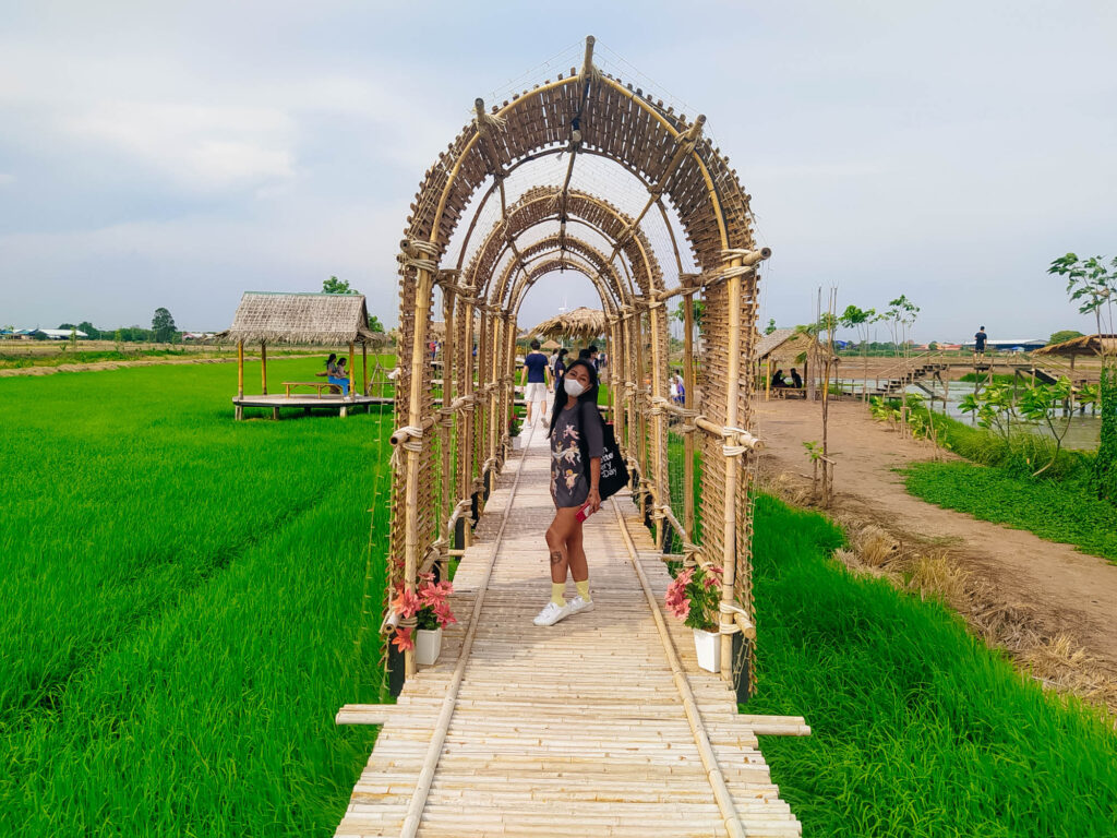 rice field tunnel of bamboo