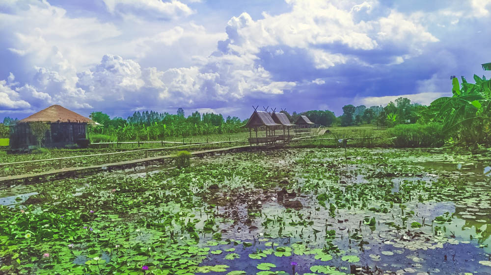 The long bamboo path across the lily field for a coffee เวียน เดอ บัว คาเฟ่